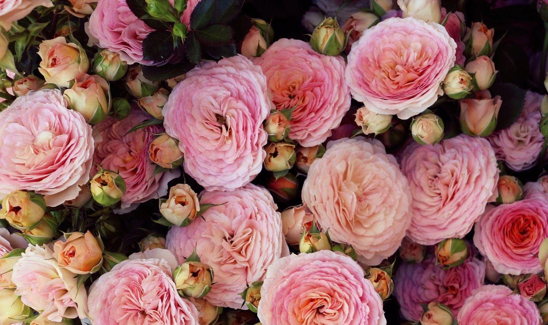 HiDubai-business-tribulus-flowers-trading-shopping-garden-outdoor-umm-suqeim-3-dubai