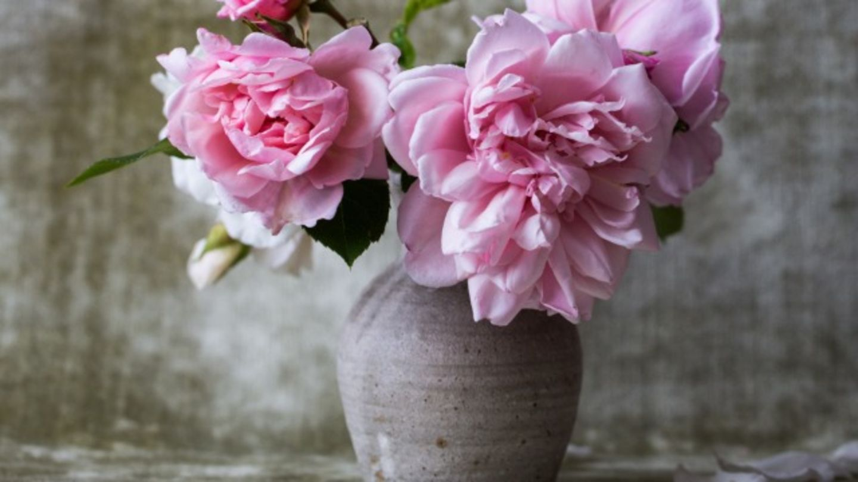 HiDubai-business-plant-street-flowers-l-l-c-shopping-garden-outdoor-al-satwa-dubai