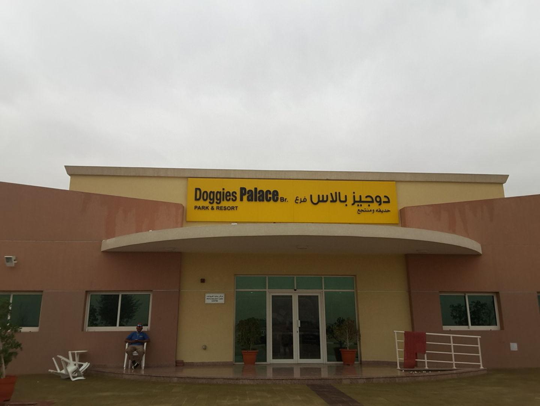 HiDubai-business-doggies-palace-park-and-resort-animals-pets-plants-animal-shelters-adoption-centres-warsan-3-dubai-2