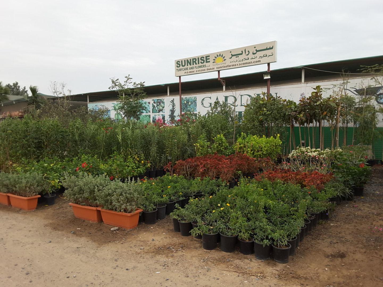 HiDubai-business-sunrise-turfcare-and-flowers-home-gardening-landscaping-warsan-3-dubai-2