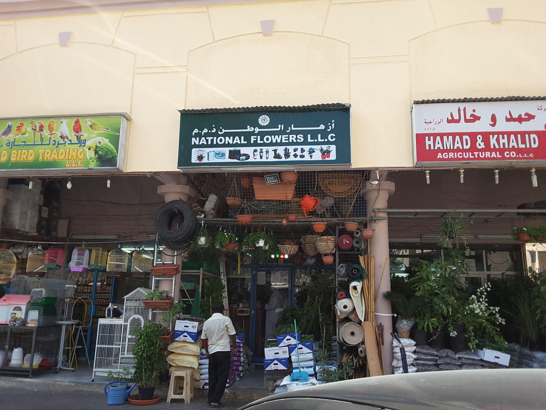 HiDubai-business-national-flowers-animals-pets-plants-plants-gardening-stores-al-satwa-dubai-2