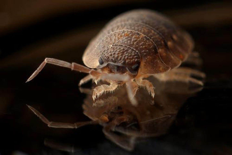 HiDubai-business-al-safi-pest-control-services-home-pest-control-disinfection-services-corniche-deira-dubai