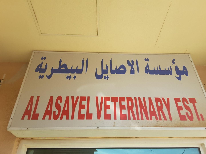 HiDubai-business-al-asayel-veterinary-animals-pets-plants-pet-clinics-vets-margham-dubai-2