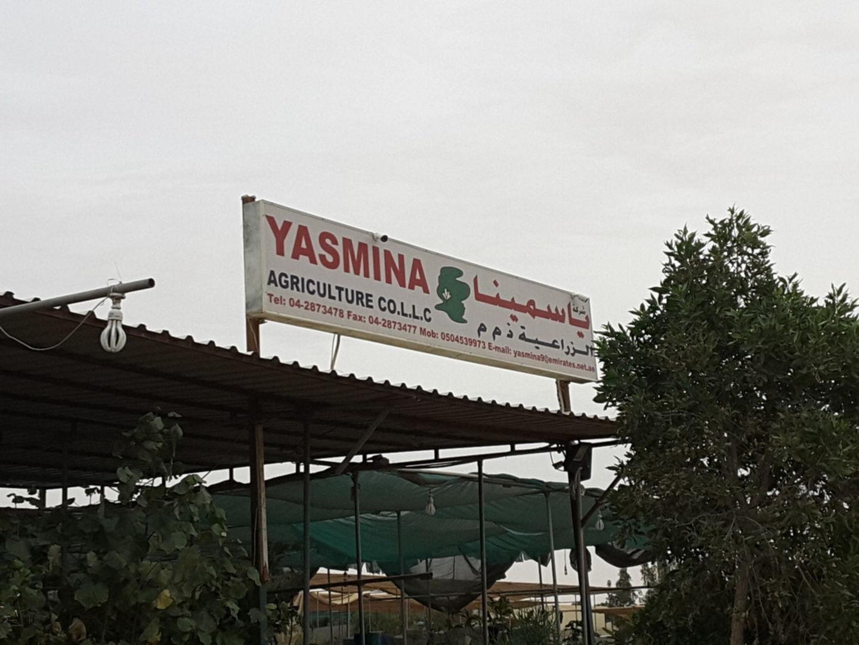 HiDubai-business-yasmina-agriculture-home-gardening-landscaping-warsan-3-dubai-2