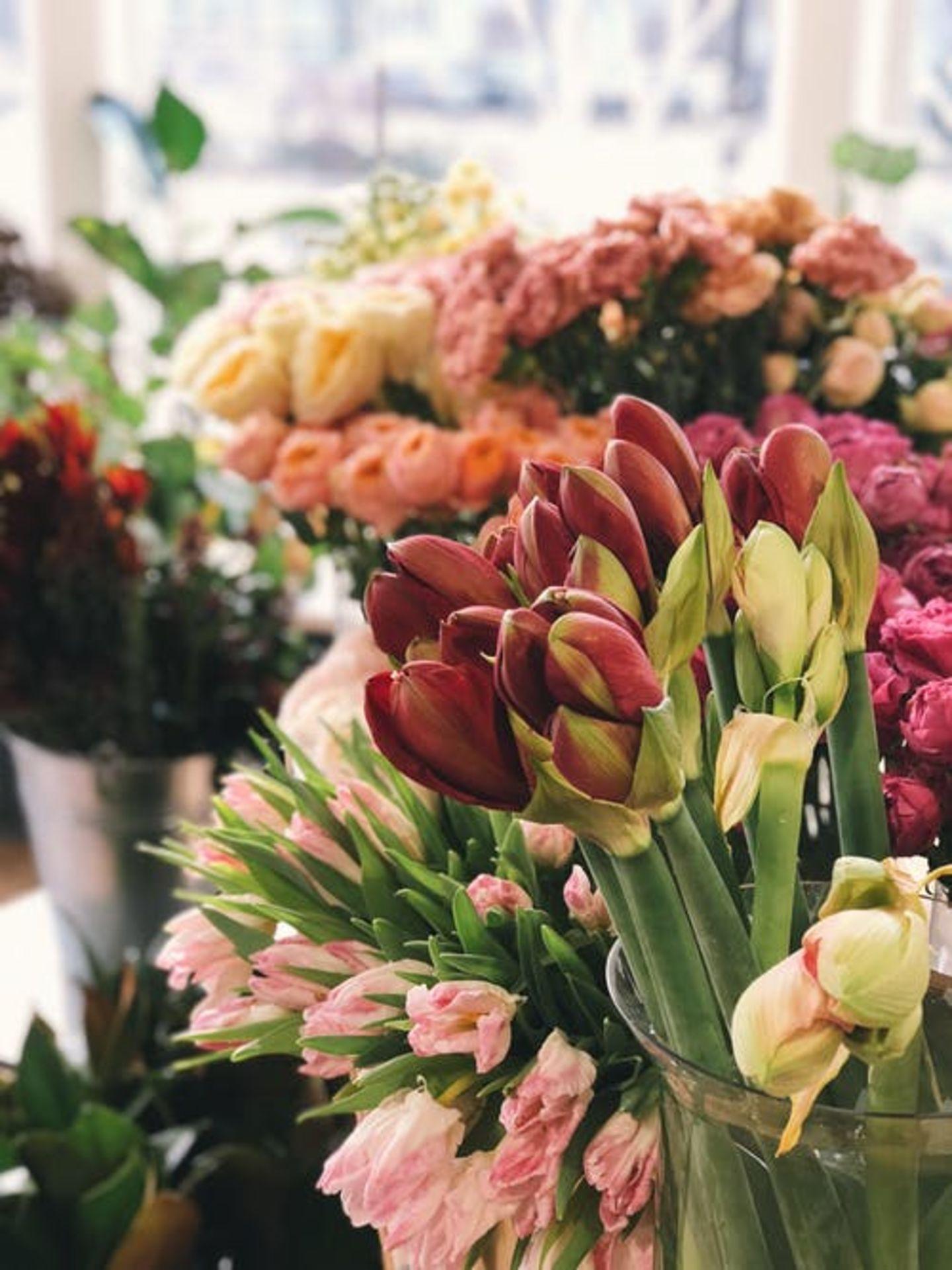 HiDubai-business-flower-land-landscape-gardening-works-maintenance-home-gardening-landscaping-international-city-warsan-1-dubai