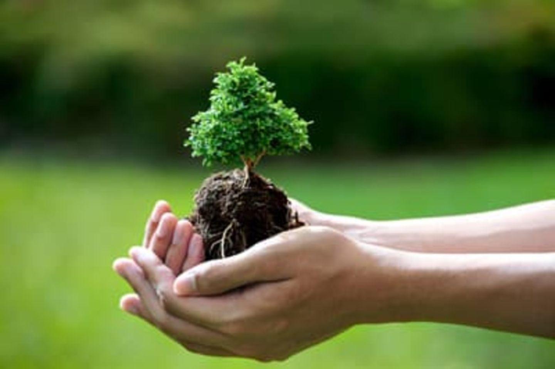 HiDubai-business-tottori-resource-middle-east-for-soil-conditioners-animals-pets-plants-plants-gardening-stores-business-bay-dubai