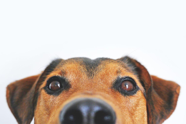 HiDubai-business-paws-pet-planet-animals-pets-plants-pet-grooming-centres-dubai-investment-park-2-dubai-2