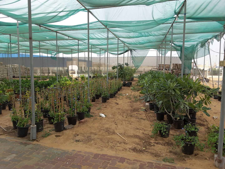 HiDubai-business-kahoot-landscape-gardening-home-gardening-landscaping-warsan-3-dubai-2