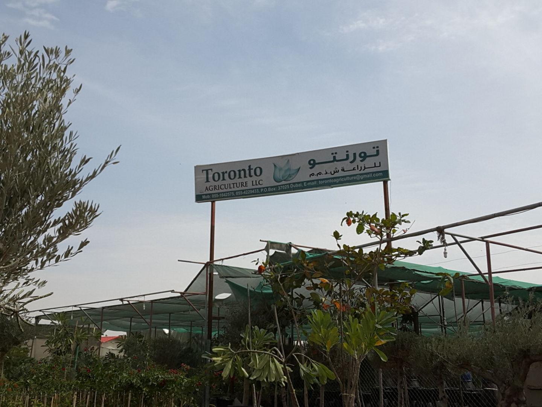 HiDubai-business-toronto-agriculture-home-gardening-landscaping-warsan-3-dubai-2