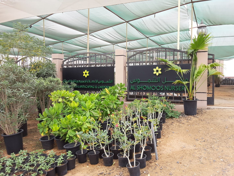 HiDubai-business-al-shomoos-nursery-home-gardening-landscaping-warsan-3-dubai-2