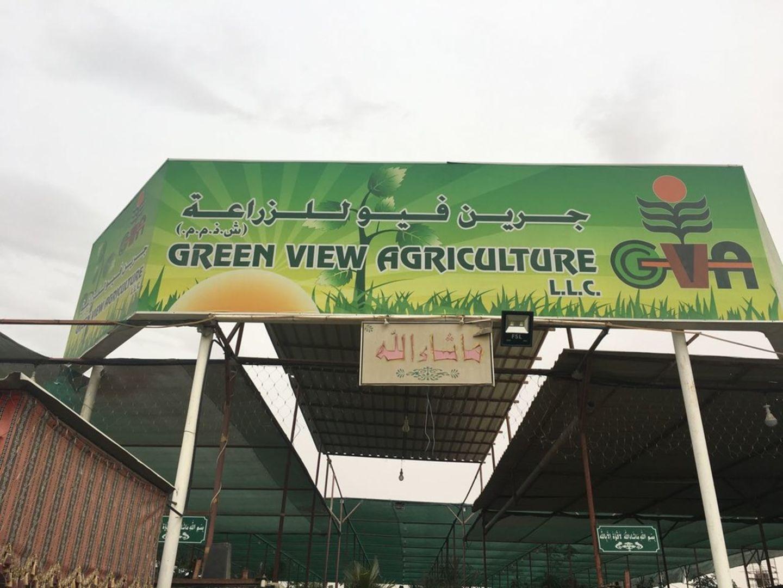 HiDubai-business-green-view-agriculture-home-gardening-landscaping-warsan-3-dubai-2