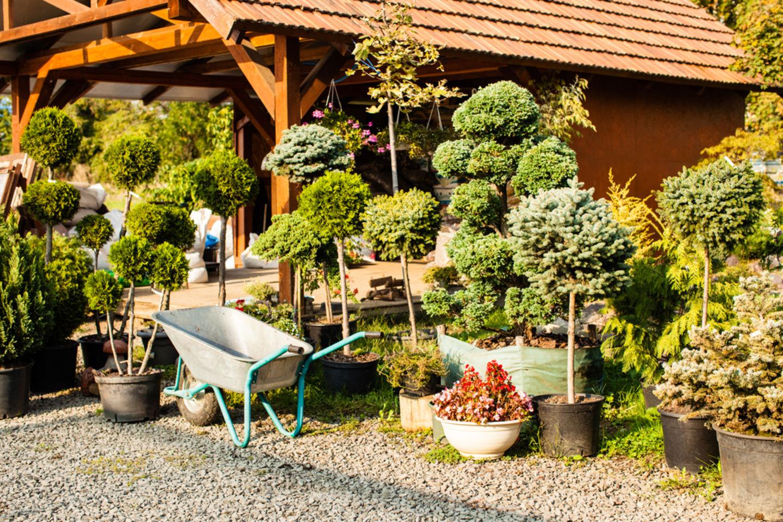 HiDubai-business-xbirdo-birds-trading-animals-pets-plants-pet-food-accessories-stores-warsan-3-dubai-2