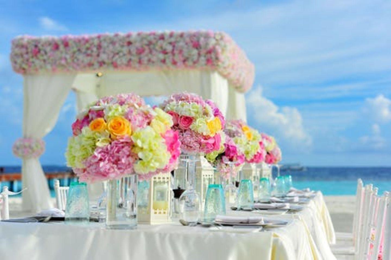 HiDubai-business-bliss-flower-boutique-animals-pets-plants-plants-gardening-stores-al-quoz-industrial-1-dubai-2