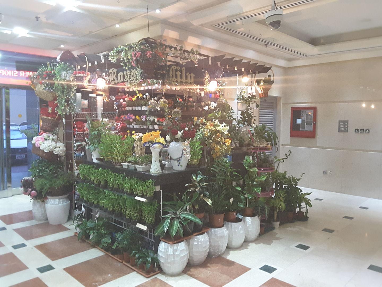 HiDubai-business-royal-lily-flowers-animals-pets-plants-plants-gardening-stores-mankhool-dubai-2
