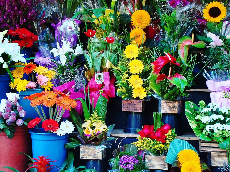 HiDubai-business-camellia-flowers-animals-pets-plants-plants-gardening-stores-al-mizhar-1-dubai