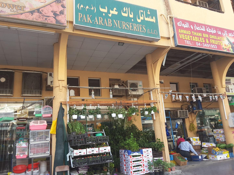 HiDubai-business-pak-arab-nurseries-home-gardening-landscaping-al-satwa-dubai-2