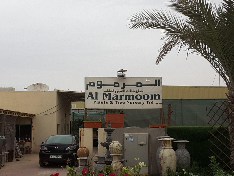 HiDubai-business-al-marmoom-plants-tree-nurseries-trading-home-gardening-landscaping-warsan-3-dubai-2