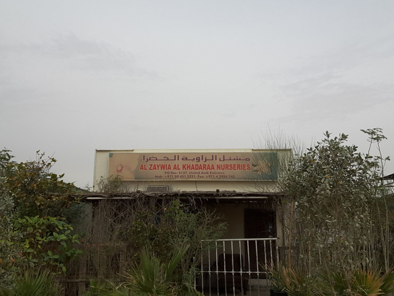 HiDubai-business-al-zaywia-al-khadaraa-nurseries-home-gardening-landscaping-warsan-3-dubai-2