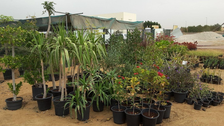 HiDubai-business-hyacinth-greenery-plants-tree-nurseries-trading-home-gardening-landscaping-warsan-3-dubai-2