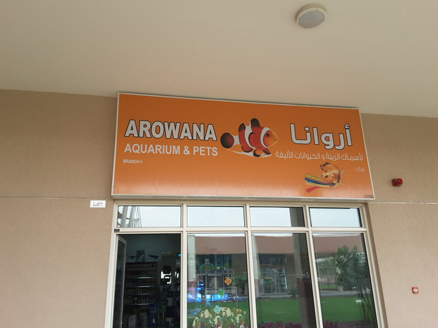 HiDubai-business-arowana-aquarium-pets-animals-pets-plants-animal-breeding-centres-warsan-3-dubai-2